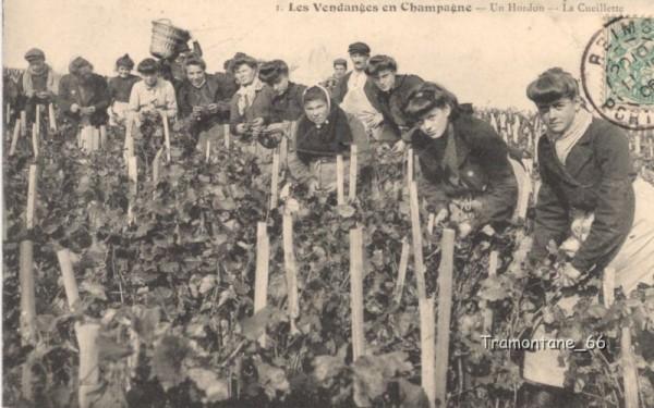 Carte postale ancienne de Vendanges en Champagne