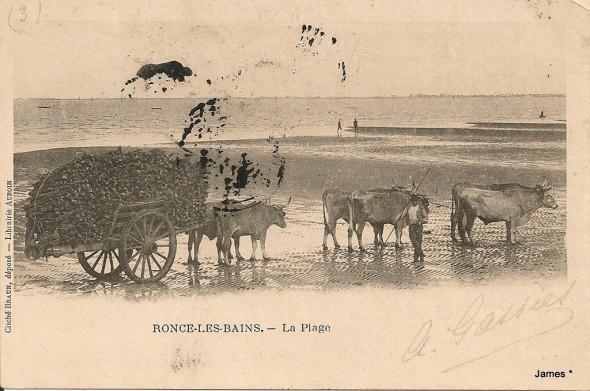 Mektoub17 1360061931-Ronce-Les-Bains-Attelage-de-Boeufs